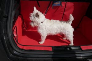 dog in a boot with a boot liner