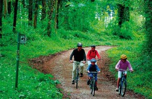 Cycling-in-the-New-Forest