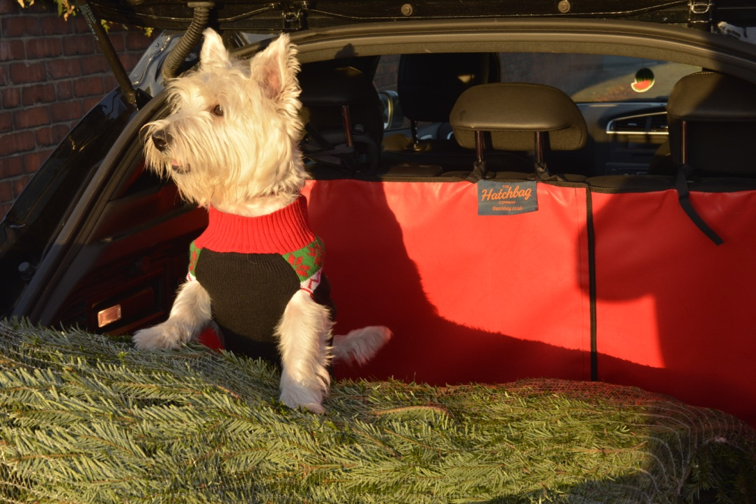 a dog and christmas tree in a car boot