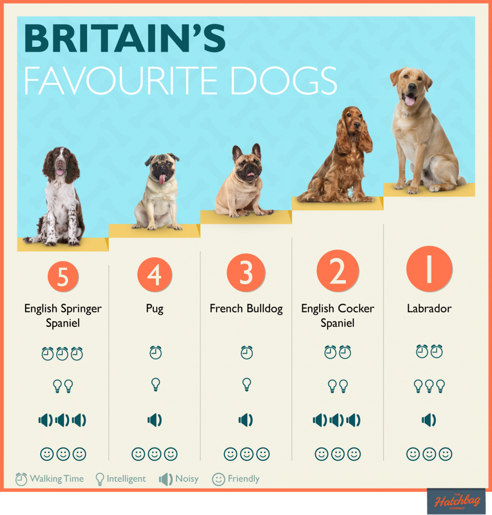 top 5 dog breeds in UK